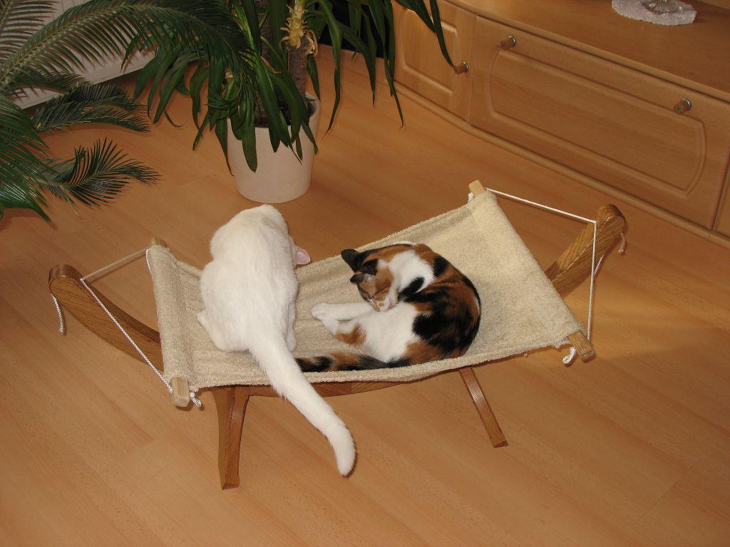 h ngematte f r katzen chrisis hobbypage. Black Bedroom Furniture Sets. Home Design Ideas